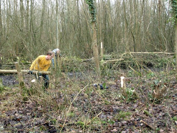 Sander sleept een pas afgezaagde boom weg uit een drassig gebied